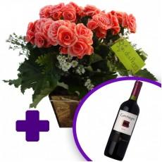 Begônia no Cachepot de Madeira + Vinho Chileno Gato Negro Shiraz