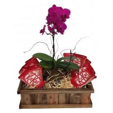 Cesta Kitkat e Orquídea