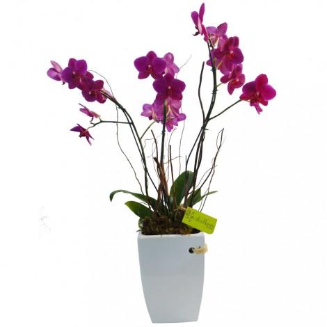 Orquídea Rosa no Cerâmica Grande