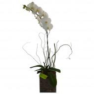 Orquídea Branca no Vidro