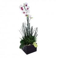 Orquídea Phalaenopsis em Cachepot de Madeira