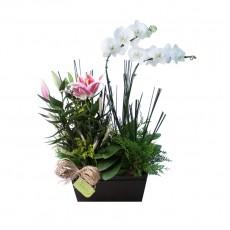 Dueto de Orquídea e Lírio