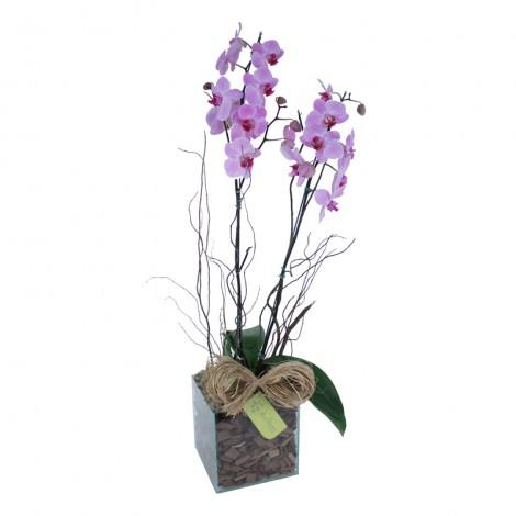 Orquídea Phalaenopsis em Peça Vidro
