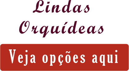 data/Banners/principal/lindas-orquideas-opcoes-bh.png